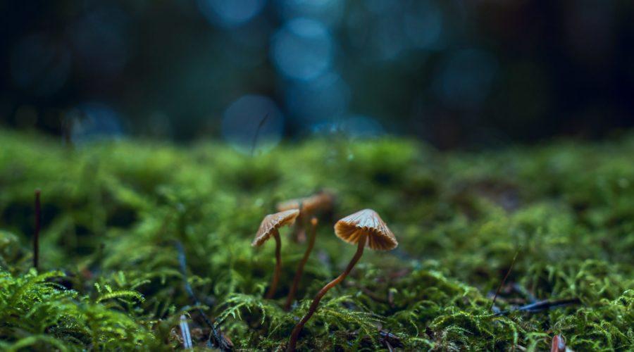 soilborne fungi