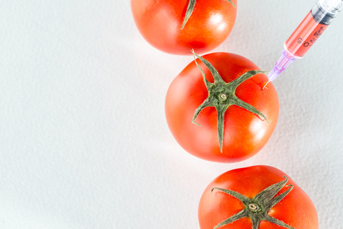 eating genetic modification red tomato laboratory glassware agriculture