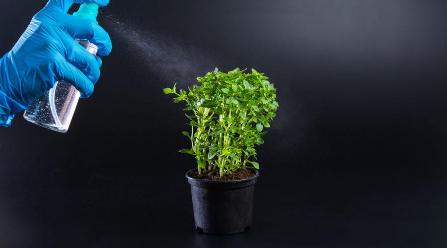 plant spraying