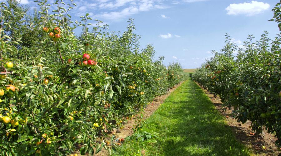 food biodiversity